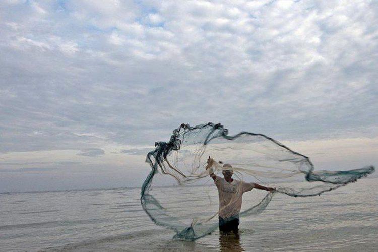 Resultado de imagem para Pescados do Nordeste não apresentam riscos para consumo
