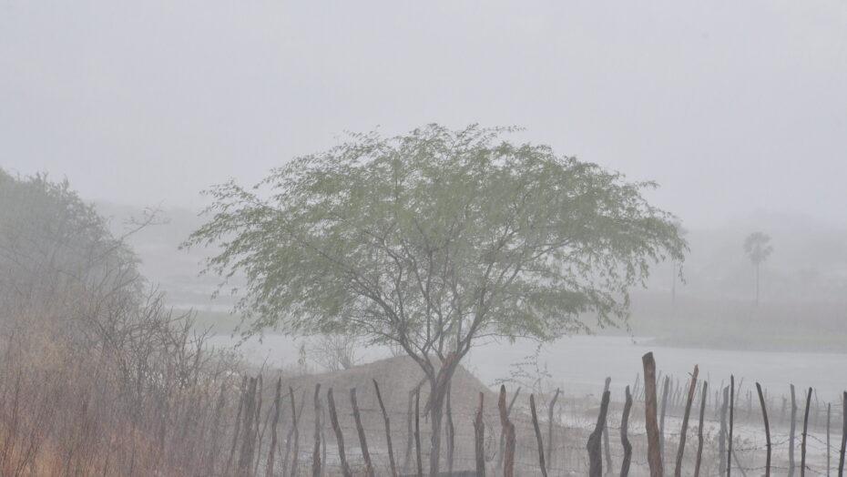 Chuva no Sertão 8 e1613489602139