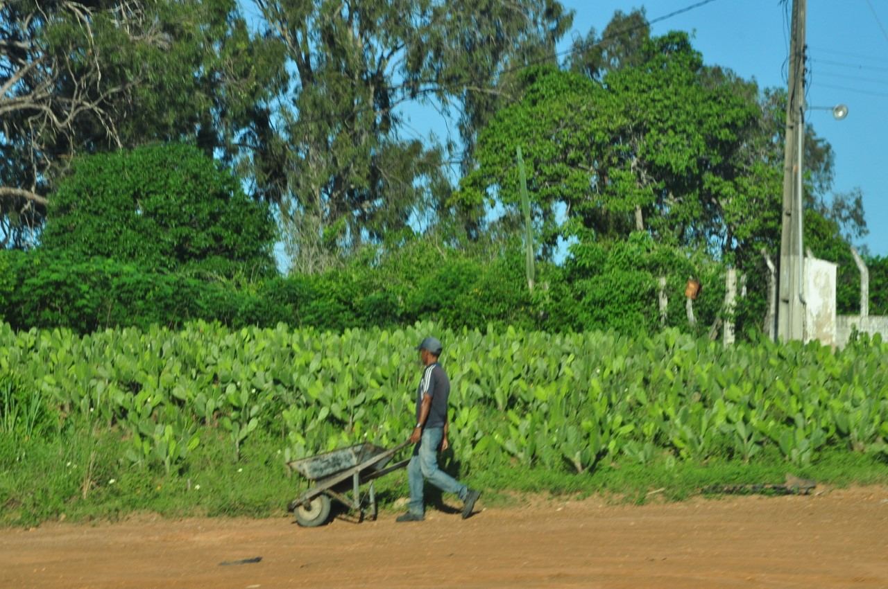 thumbnail Agricultor no Interior RN 5