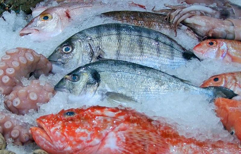 relacao aguaproteina no pescado uma nova ferramenta no combate a fraude economica aquaculture brasil