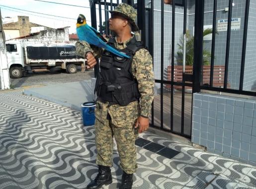 Resgate foi feito no domingo. Foto: Divulgação