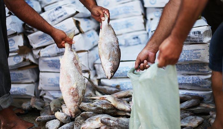 vereador cobra que prefeitura distribua o peixe da semana santa para a populacao carente 1522169961