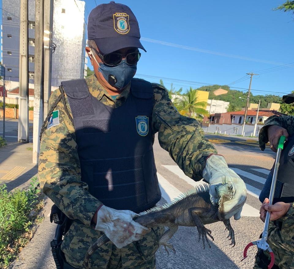 GMN resgate de iguana