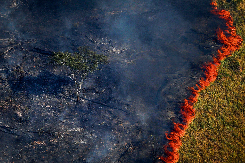 amazonia desmatamento 2017 5536
