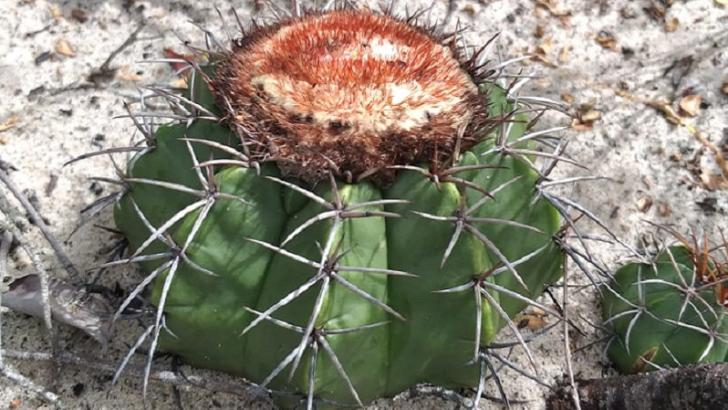Flora do rn ganha mais um destaque internacional em 2020