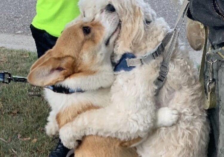 Conheça wallace, o cachorro que adora abraços