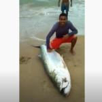 Camurupim de quase 2 metros é pescado no litoral norte potiguar; veja vÍdeo