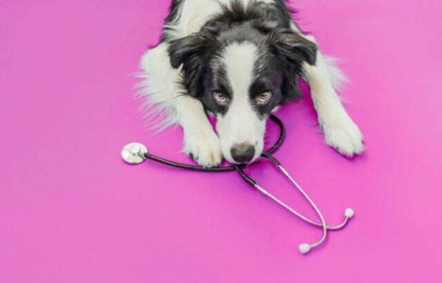 'outubro rosa pet': confira 5 principais dúvidas sobre câncer de mama em animais