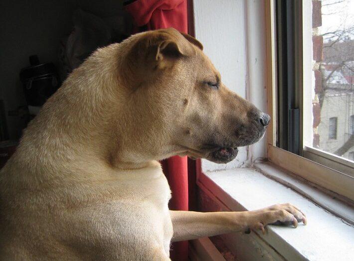 7 dicas para te ajudar a criar cachorros em apartamento