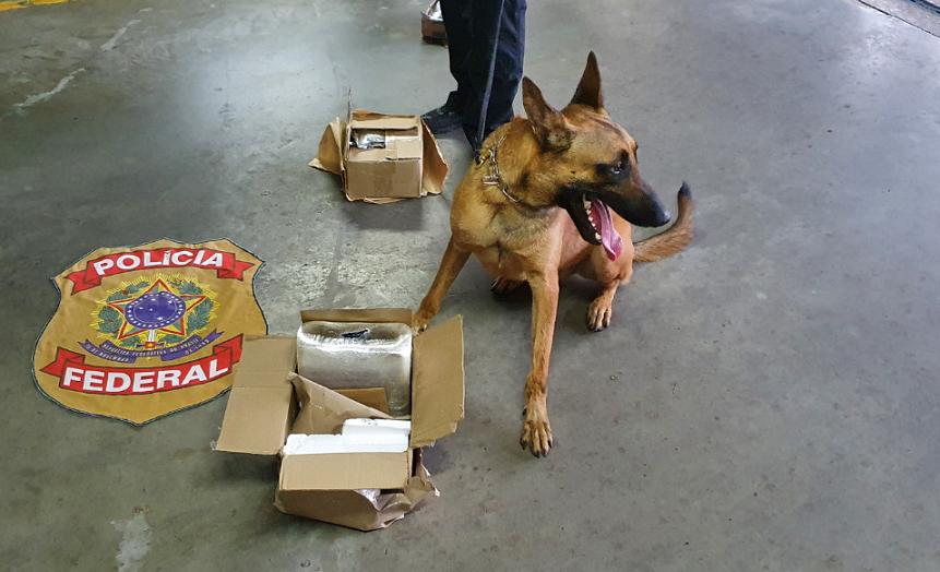 Com ajuda de cão farejador, pf apreende 5 kg de cocaína enviados pelos correios do acre para o rn