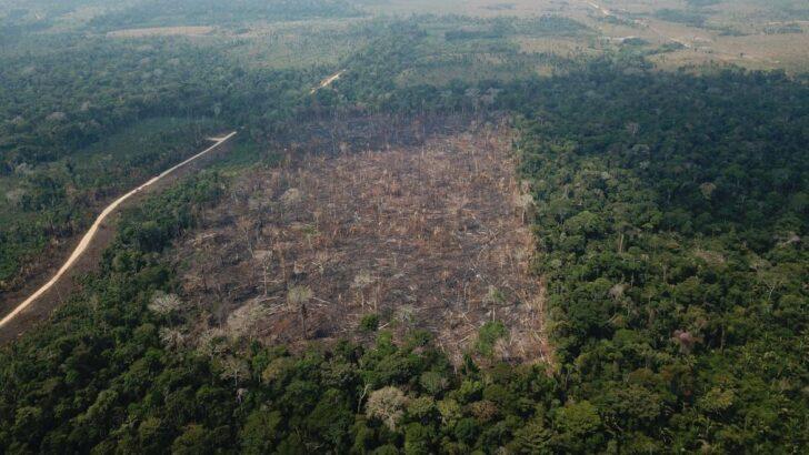 Desmatamento da amazônia sobe 9,5% e atinge 11 mil km2
