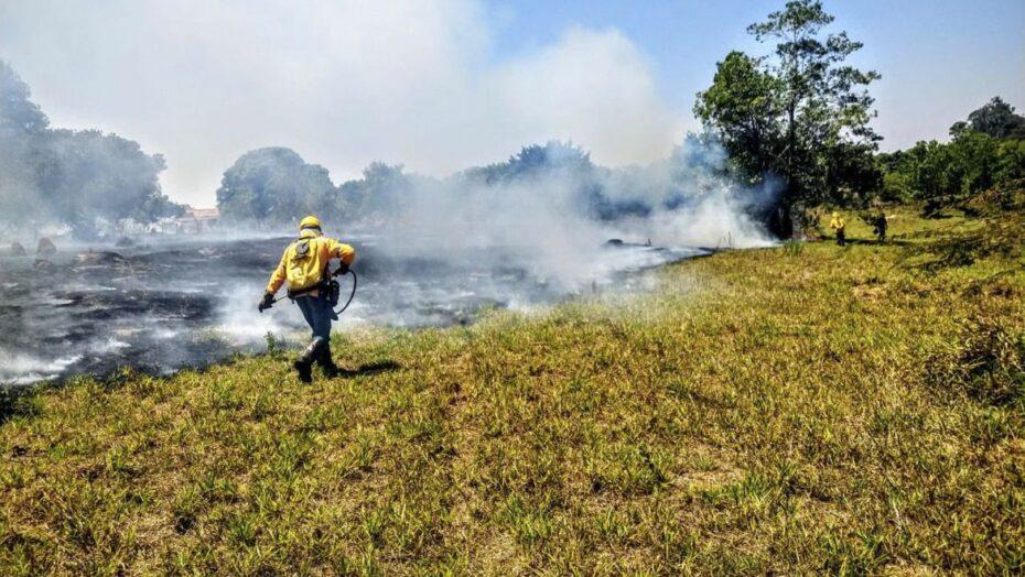 incendios florestais nas unidades de conservacao caem pela metade