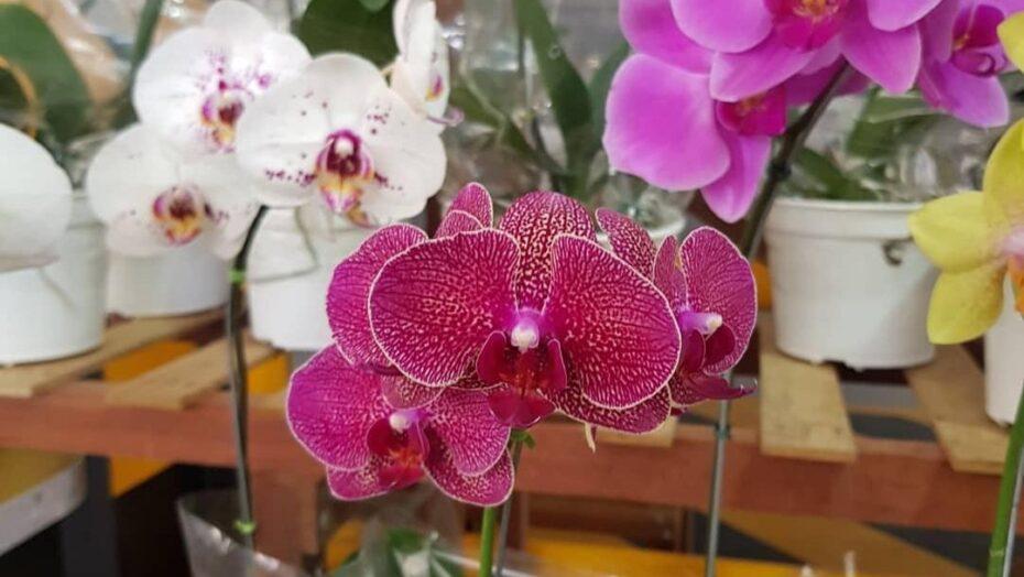 Fest flores acontece nesta semana em natal