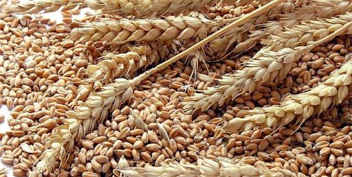 Visto como vilão, trigo pode ser incluído na dieta sem terrorismo nutricional