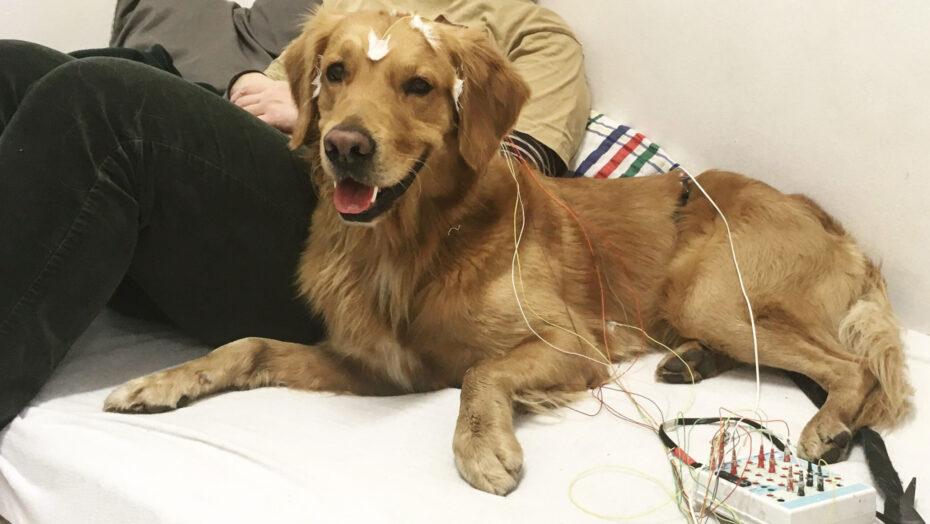 Pesquisadores confirmam: cães não entendem o que humanos dizem