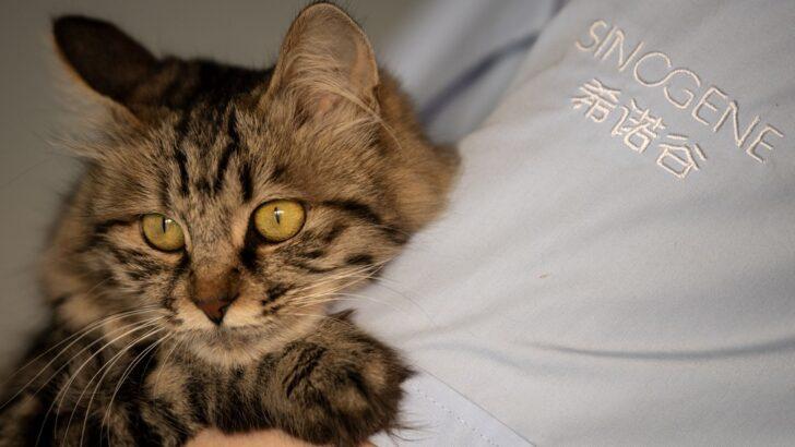 Areia sanitária para gato: tudo o que você deve saber
