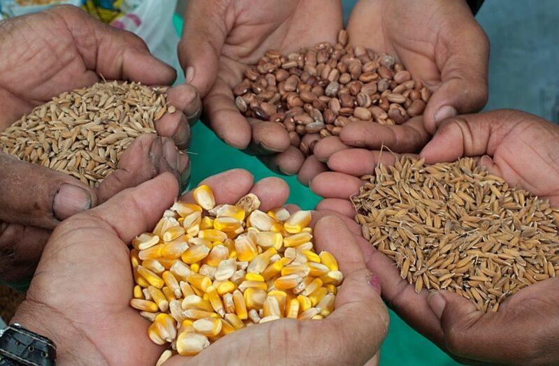 Governo do rn inicia distribuição de sementes crioulas a 7,5 mil famílias de agricultores