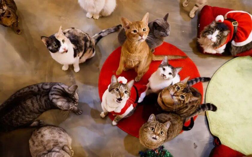 Quer uma vida boa? este filósofo sugere aprender com os gatos