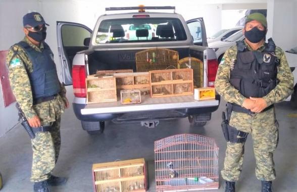 Guarda municipal resgata 70 aves silvestres em feira na zona norte de natal