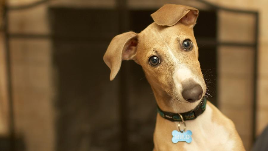 Prefeito assina decreto que permite sacrifício de animais abandonados, na pb