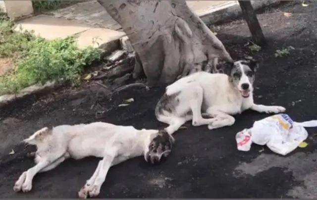 Cão foi atropelado no ceará e amigo cuidou dele até o resgate chegar