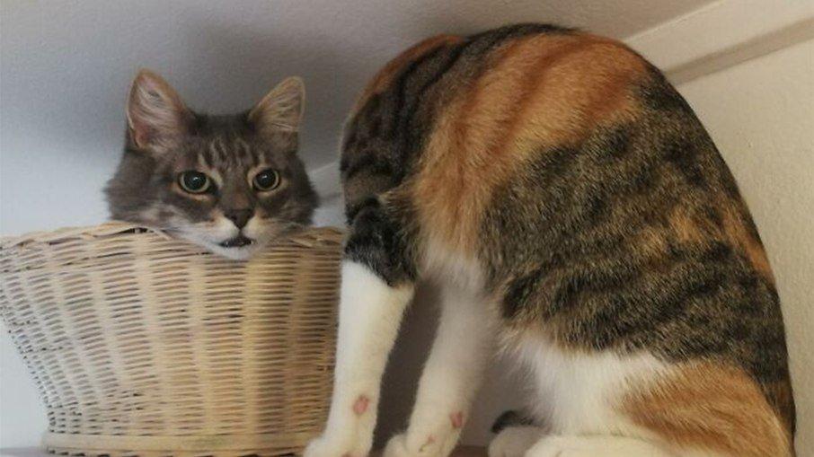 Gato sem cabeça? foto que viralizou deixa internautas confusos