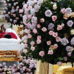 Mulher mantém corpo da mãe na sala por falta de vaga em cemitério