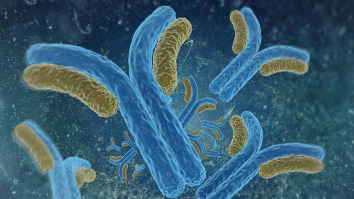 Estudo alemão descobre proteína associada ao tempo de vida; saiba qual