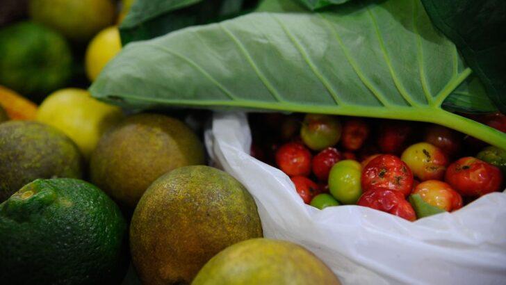 Onu: 931 milhões de toneladas de alimentos foram para o lixo em 2019