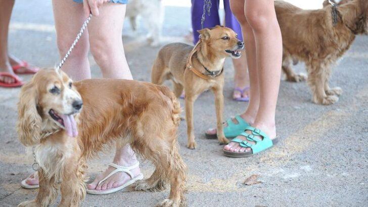 Pesquisa mostra taxa maior de infecção de animais pela covid-19