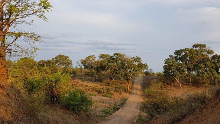 Caçador ilegal morre pisoteado por elefantes em parque da África do sul