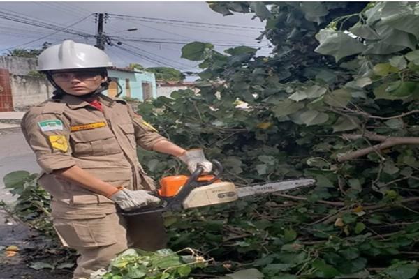 Em três meses, corpo de bombeiros atendeu 133 ocorrências no rn envolvendo quedas de árvores