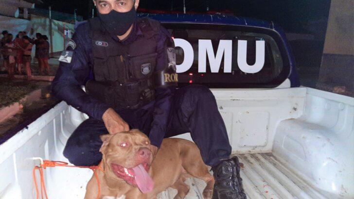 Guarda municipal salva criança do ataque de dois pitbulls na zona norte de natal
