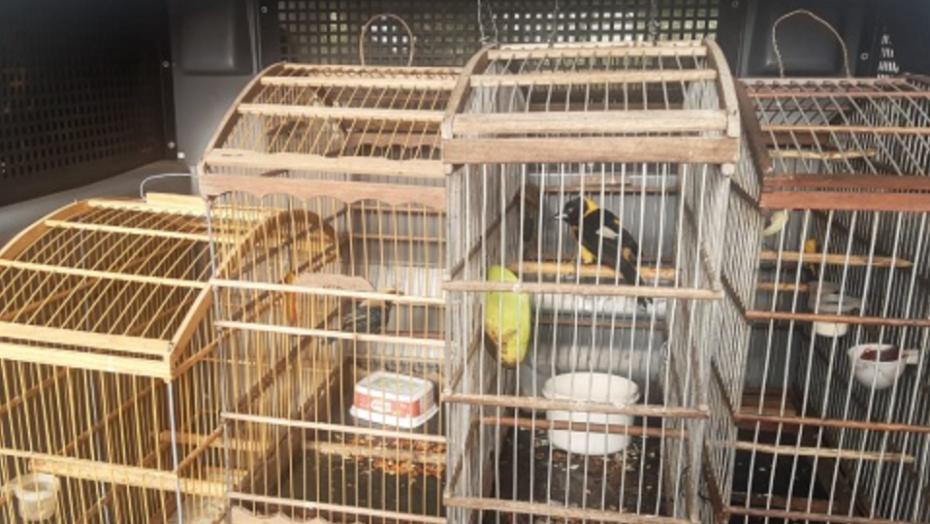 Pm resgata aves silvestres em feira livre na zona norte de natal