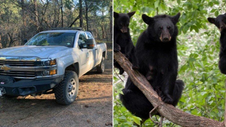 Restos mortais de mulher desaparecida são encontrados dentro de ursos