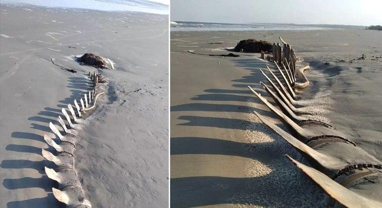 Esqueleto gigante aparece na areia de praia e causa curiosidade
