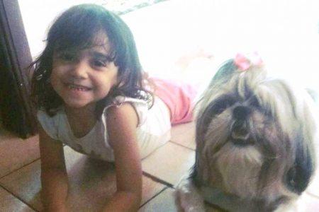 Cadela morre após proteger criança de 8 anos em ataque de pit-bull
