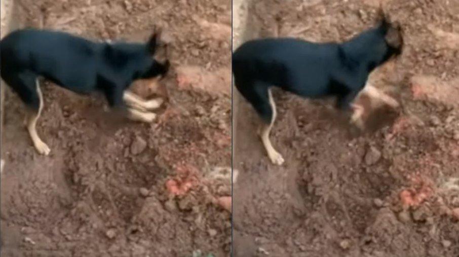 Pinscher cava buraco, mostra drogas à polícia e entrega traficante; veja vÍdeo