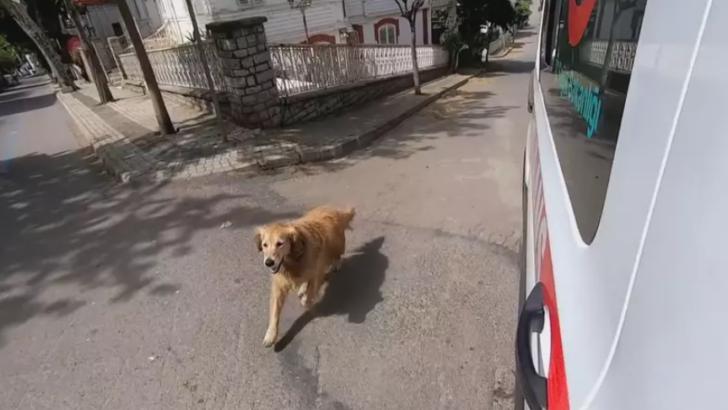 VÍdeo: cachorro segue ambulância com tutora que passou mal