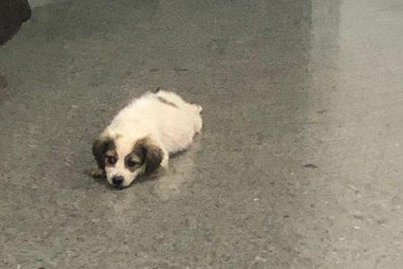 Homem que arrastou cachorro até a morte é condenado a 3 anos de prisão