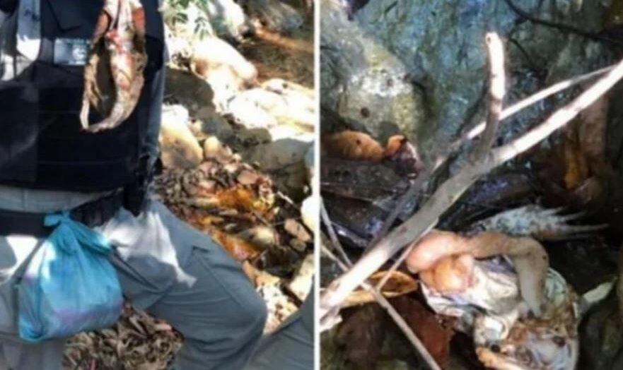 Saiba quais animais o serial killer lázaro barbosa abateu e comeu na mata