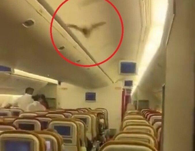 Morcego na primeira classe obriga avião a fazer pouso de emergência e causa prejuízo milionário