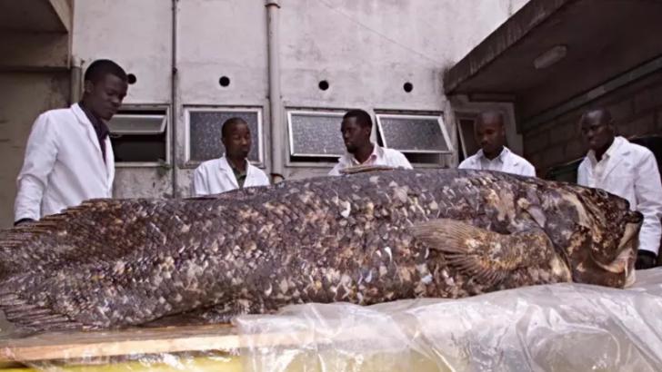 """Peixe que foi rotulado como """"fóssil vivo"""" surpreende cientistas novamente"""