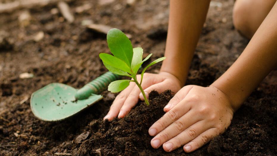 """""""planta natal"""" retoma plantio de árvores nativas na capital potiguar"""