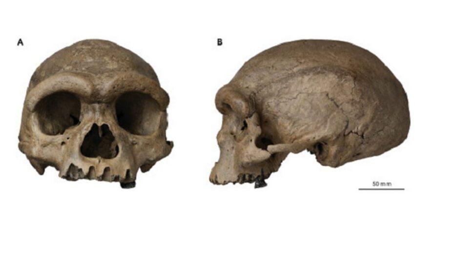 'homem dragão': cientistas descobrem hominídeo na china que poderia mudar evolução