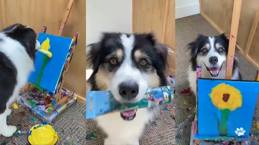 Cachorra pintora