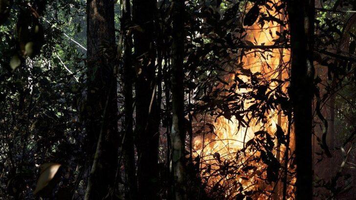 Desmatamento tem queda na amazônia em agosto, mas inpe sobe 137% no cerrado