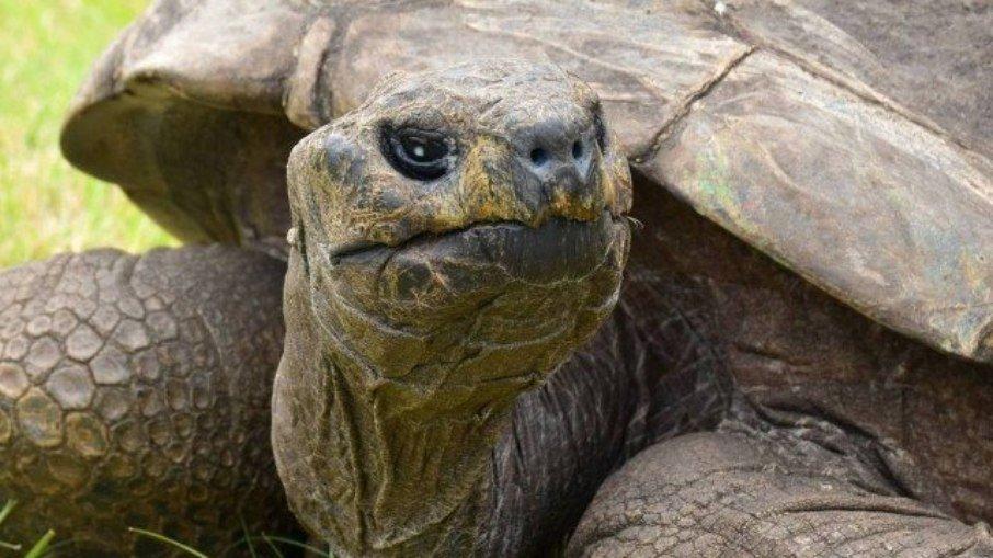 Animal terrestre mais velho do mundo é uma tartaruga de 189 anos chamada jonathan