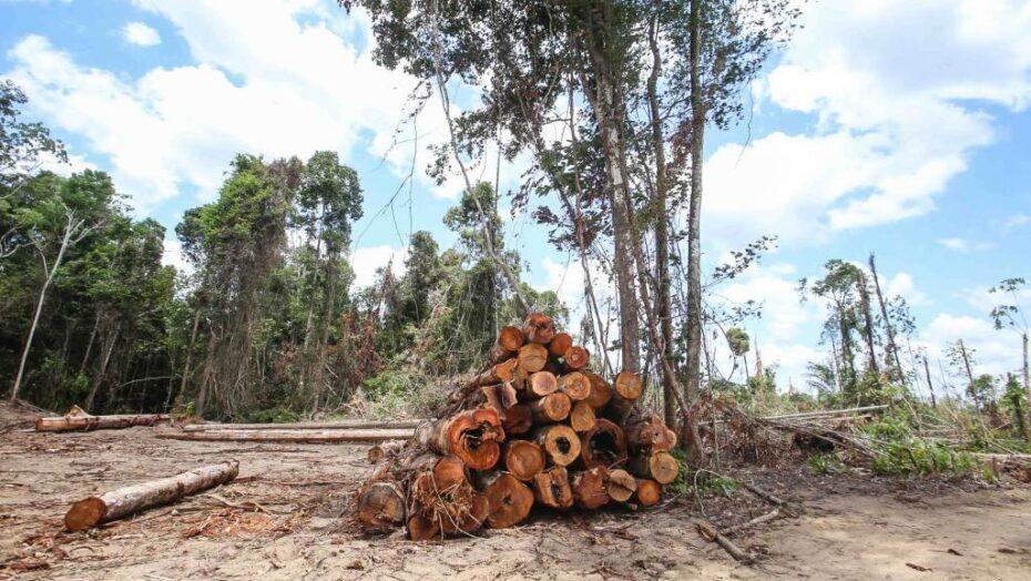 Brasil é o quarto país do mundo que mais mata ativistas ambientais, diz ong