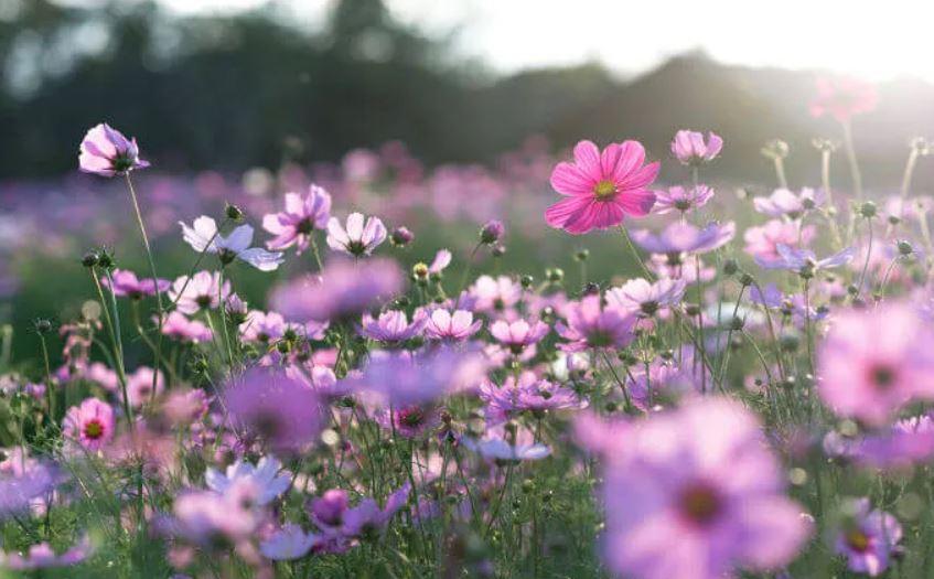 Na próxima quinta, a coluna festeja um mês e também comemora a chegada da primavera